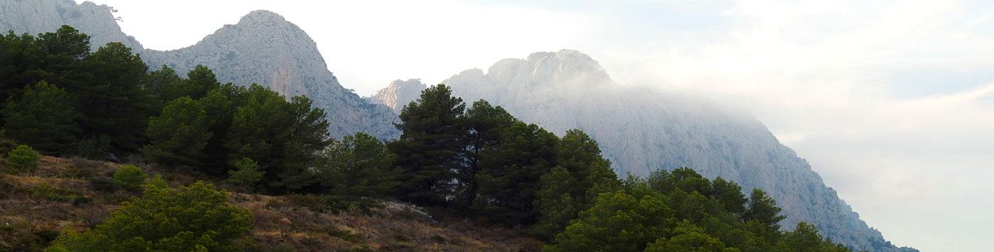 aoudad hunting landscape