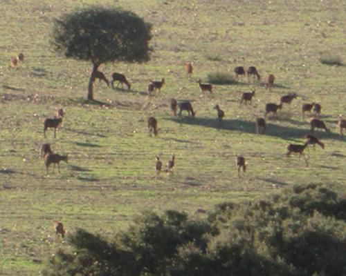 driven hunt monteria spain