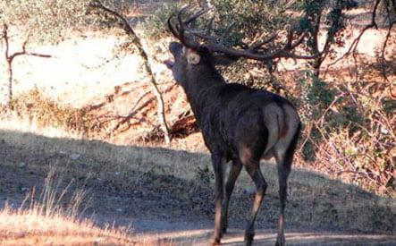 spanish driven hunt