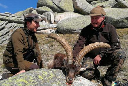 gredos ibex hunting