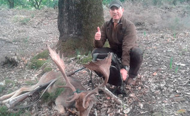 fallow deer trophy in a driven hunting monteria
