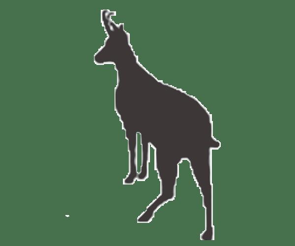 pyrenean chamois icon