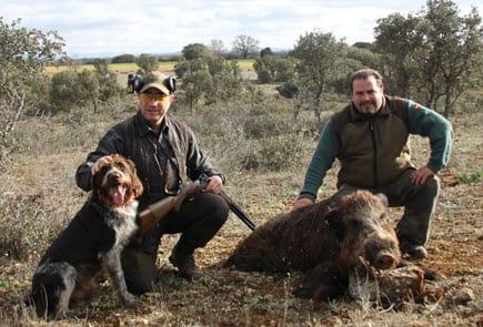 Wild boar hunt during a walk-up in Spain