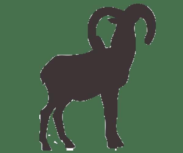 mouflon icon
