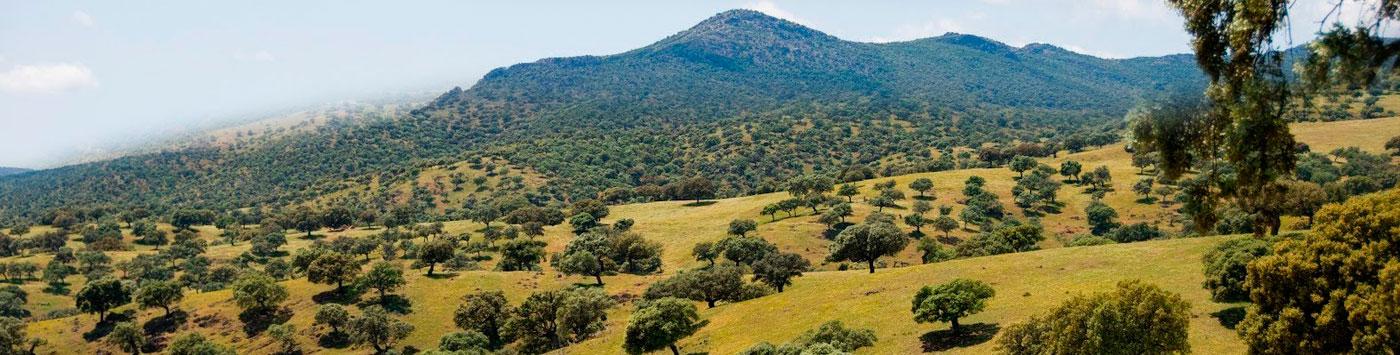 hunting landscape