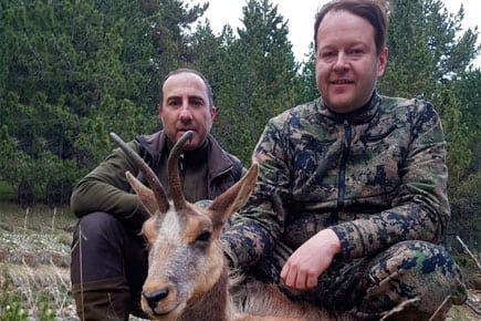 pyrenean chamois trophy with hunter