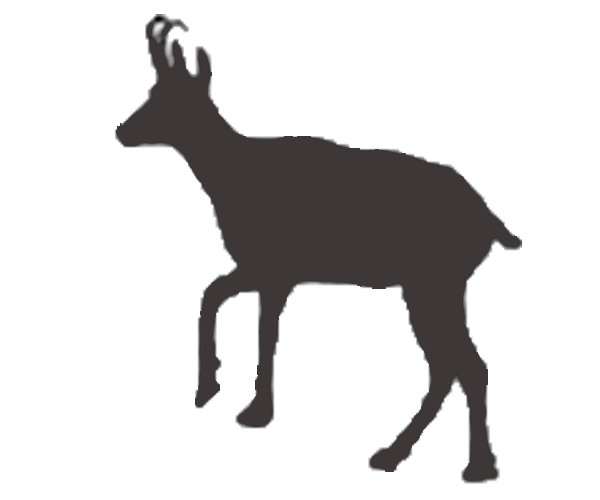 cantabrian chamois icon