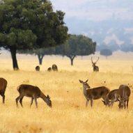spanish-driven-hunt-monteria