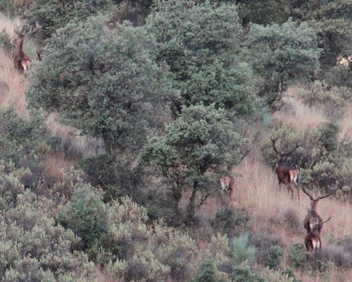 driven hunting monteria