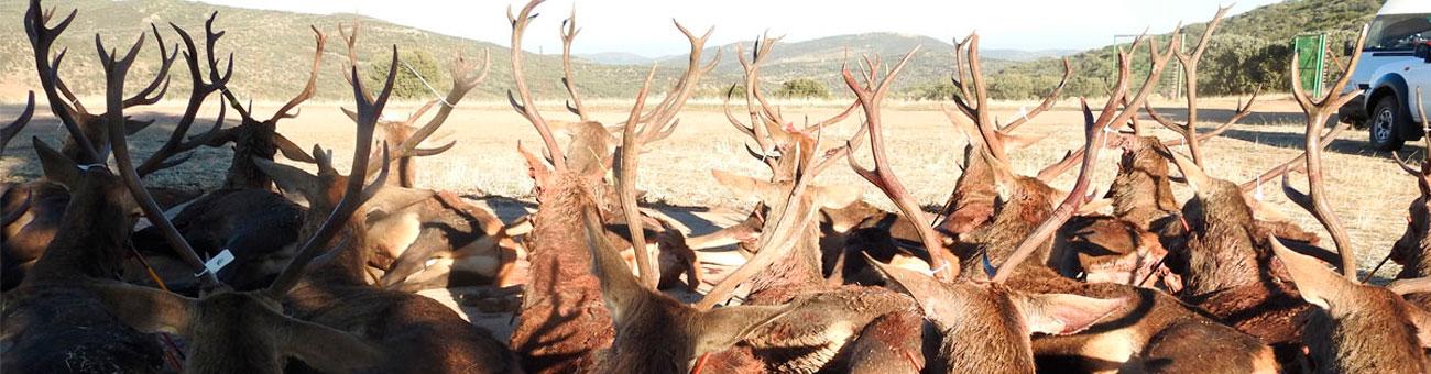 parade hunting monteria