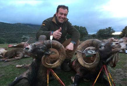 wild sheep spain trophy